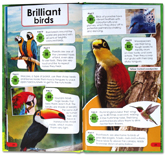 Over 100 Fact For Kids Rainforests