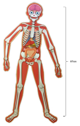 Make and Move HUMAN BODY Includes a 28-Page Book and 28 Pieces to Build a 97cm Human Body Floor Puzzle